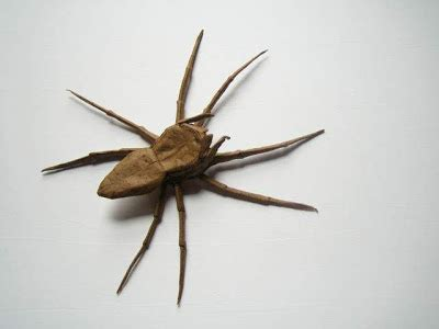 Origami Insects - insect origami damn cool pictures