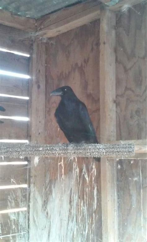 northwest raptor wildlife center nonprofit in sequim wa