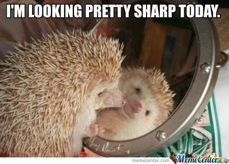 Hedgehog Meme - image gallery hedgehog meme