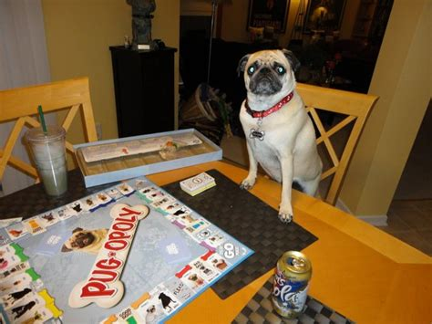pug opoly best 25 pug pictures ideas on pug dogs pugs and pugs