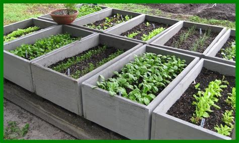 Garden Talk Vegetable Gardens Getting Started Florida Winter Vegetable Garden
