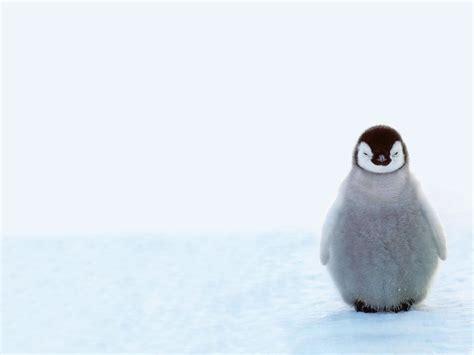8 Facts On Penguins by Penguin Facts Popsugar Australia