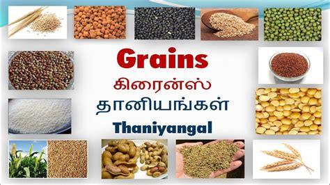 whole grains names in tamil food grains name list with images food