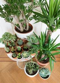 indoor plant display wonderful ways to display indoor plants the owner