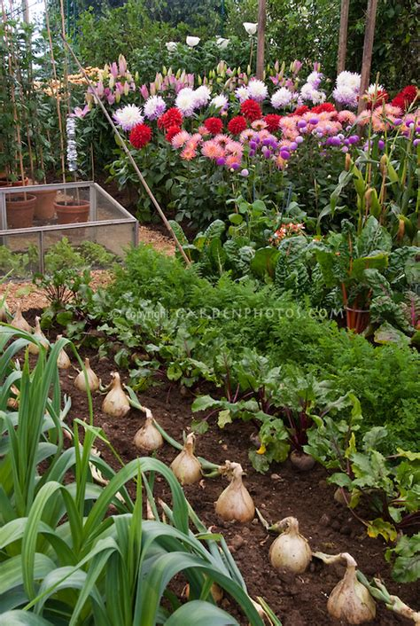 Vegetable Flower Garden Plant Flower Stock Vegetable And Flower Garden