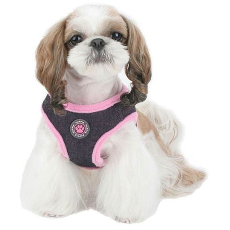 sweet and sassy shih tzu 152 best images about sassy shih tzu on