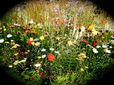 Cottage Garden Flowers By Katiealicewoodmore On Deviantart Flowers For A Cottage Garden