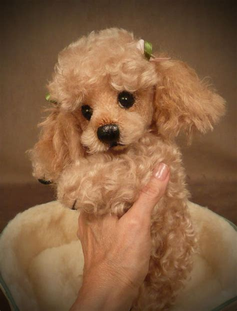 palm puppies quot tuffy quot the poodle palm puppy i d say this was a real pup but the toes looked