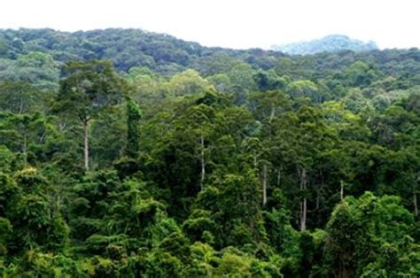 asia pacific: kaziranga national park, india geo 121