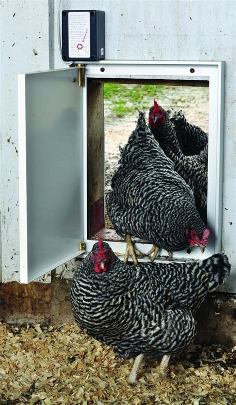 find the best automatic chicken door opener countryside
