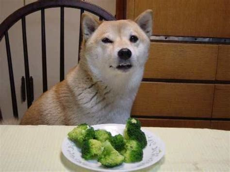 dogs broccoli broccoli your meme