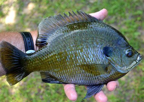 upcoming pond workshop offer keys  fishing success