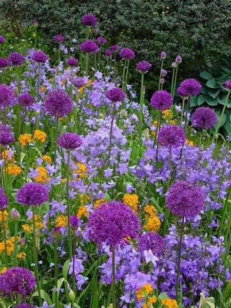 Colors Of Flowers Guide My Dreamy Flowers Of Purple Study Of Flower Colours In The Garden