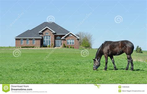 horse in backyard horse grazing in front yard stock photo image of horse
