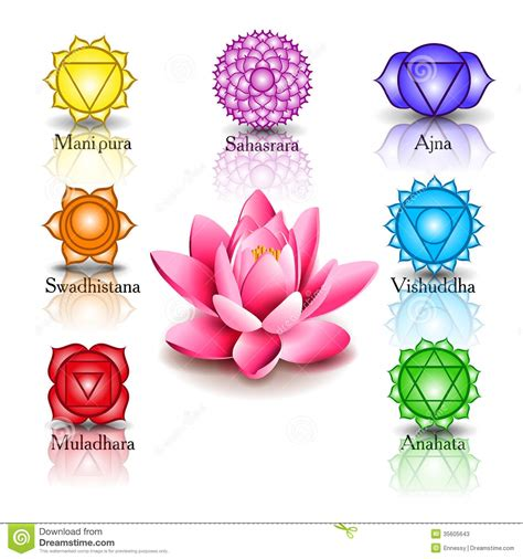 lotus flower chakra lotus and seven chakras stock photos image 35605643