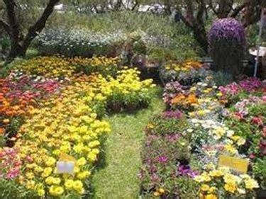 giardino della landriana giardini della landriana parchi e giardini