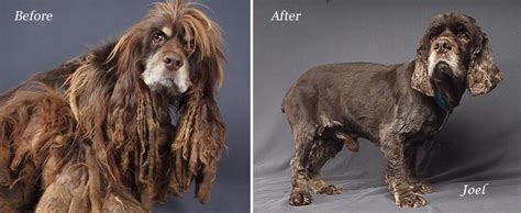national puppy mill rescue this is joel the transformation from scared puppy mill to well adjusted