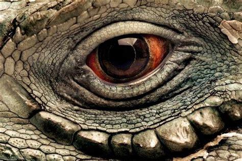 Imagenes Ojos De Animales | 40 macrofotograf 237 as de ojos animales marcianos