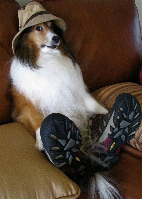 dogs wearing shoes top 10 images of dogs in shoes