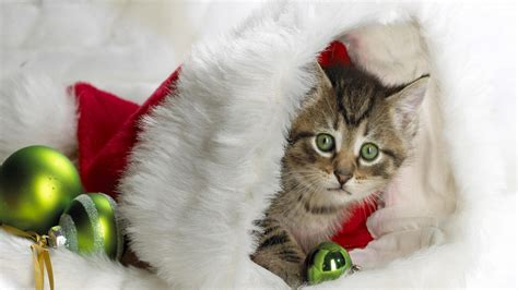 wallpaper cats christmas christmas cats wallpaper 663307