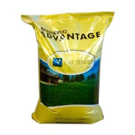 barenbrug 50 lb panterra v overseeding rye grass seed