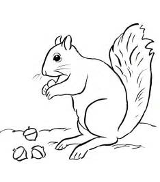 squirrel coloring pages squirrel coloring page bell