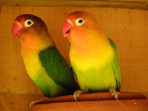 pet shop ahmedabad things before you buy the pet birds