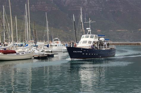 boat trip hout bay stunning cape point cycling tour with daytrippers