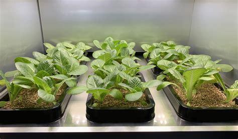 lg  debut indoor gardening appliance  greens