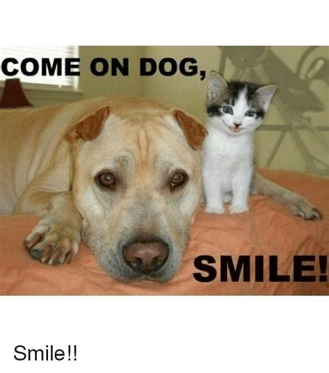 Smiling Dog Meme - funny dog meme smile www imgkid com the image kid has it
