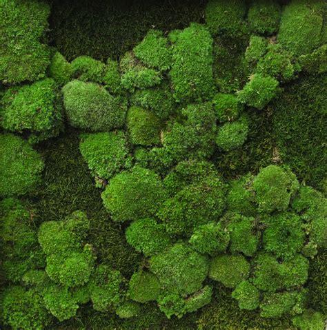 indoor moss wall preserved moss walls urban planters uk