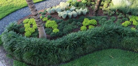 garden with liriope border and small shrubs liriope low
