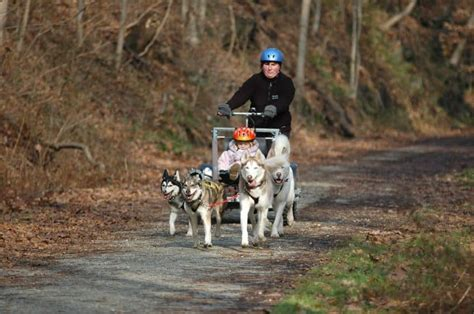 how are sled dogs trained sled breeds putting a bit of traction into your canine friend
