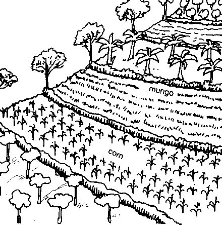 water erosion coloring page 4 vetiver for swc foodscape pinterest erosion