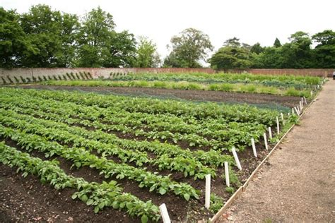 vegetable garden ireland vegetable garden 169 richard cc by sa 2 0 geograph