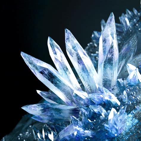 ????(Camellia)   crystallized