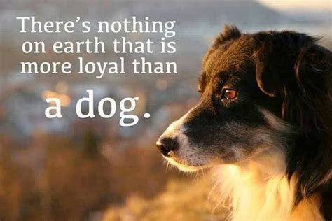 why are dogs so loyal nothing more loyal than a all things dogs nothing more and dogs