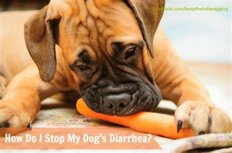 how to stop puppy diarrhea how do i stop my s diarrhea keep the wagging