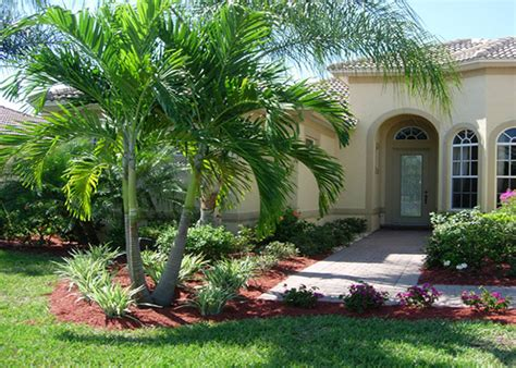 Garden Center Fort Myers Palm Trees For Sale Fort Myers