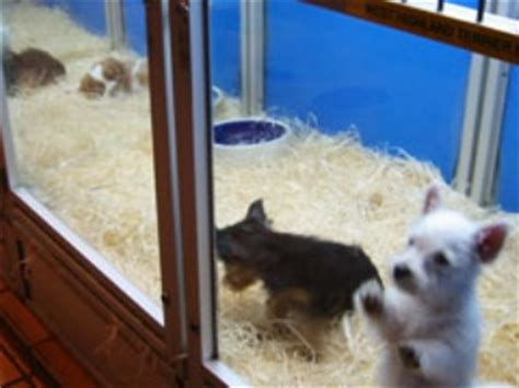 pet store that sells puppies humane society praises to ban sale of cats and dogs in pet stores