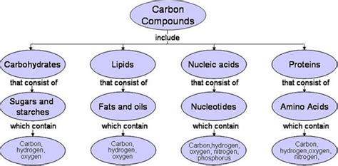 carbohydrates organic compound why are organic molecules important to living things