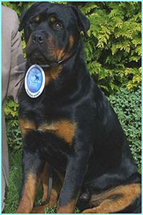 juffther rottweilers cbbc newsround galleries pup of the year 2003