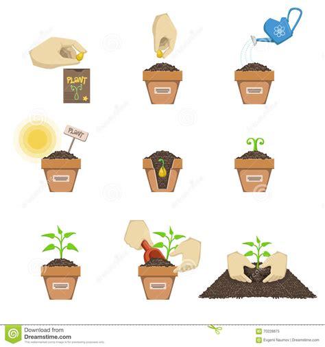 garten pflanzen reihenfolge pflanzen der samen reihenfolge vektor abbildung bild