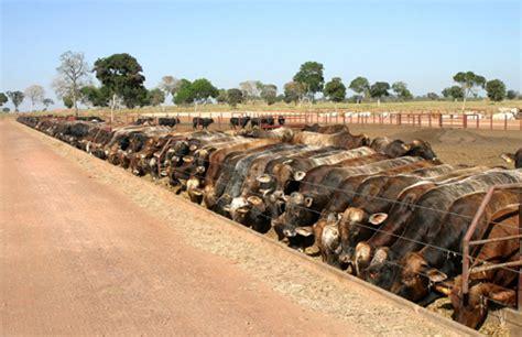 alimentazione bovini da carne edizioni pubblicit 224 italia srl eurocarni nr 2 2008