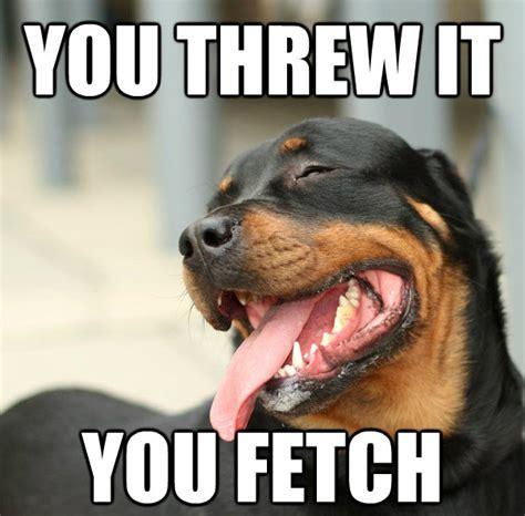 Joking Dog Meme - 45 funny dog memes dogtime