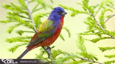nature un splendide top 10 des oiseaux color 233 s cdtl fr