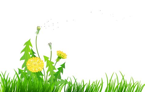 dandelion picture frame impremedia net