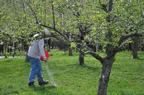 fertilizer for fruit trees how to feed fertilize fruit trees garden