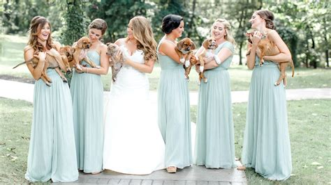 bridesmaids puppies bridesmaids hold puppies instead of flowers in adorable wedding photos