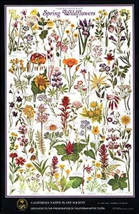 spring wildflowers poster california native plant society